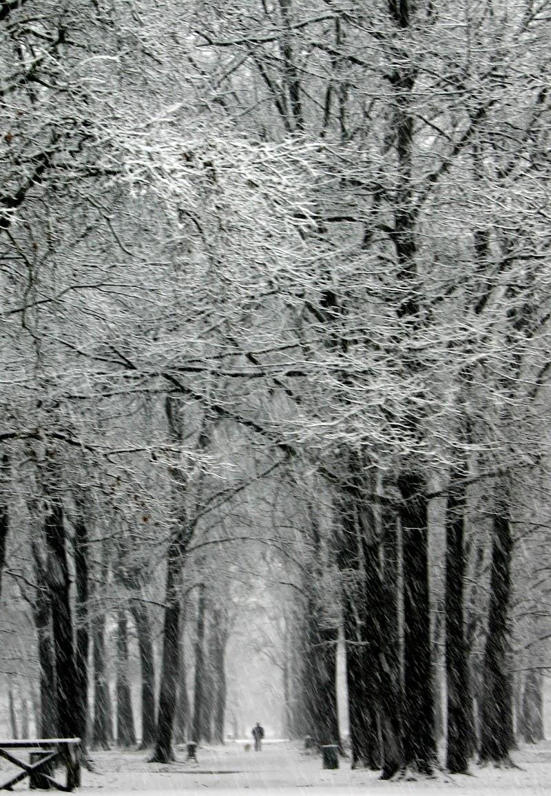 sotto la neve  di Princi Felice