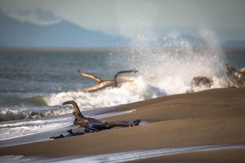 Pianeta mare di Buttero59