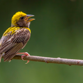 by Vijayendra Desai - Animals Birds
