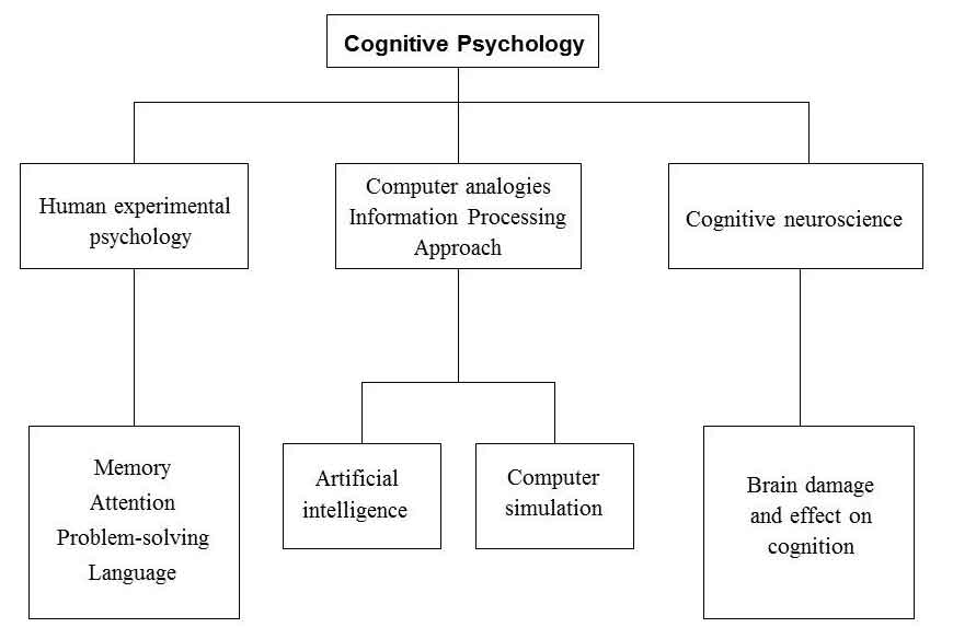 Cognition And Behavior Attention >> Idiosyncratic Knowledge Cognitive Psychology