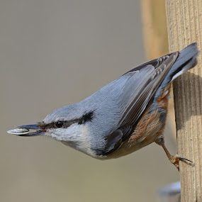 by Kjetil Salomonsen - Animals Birds