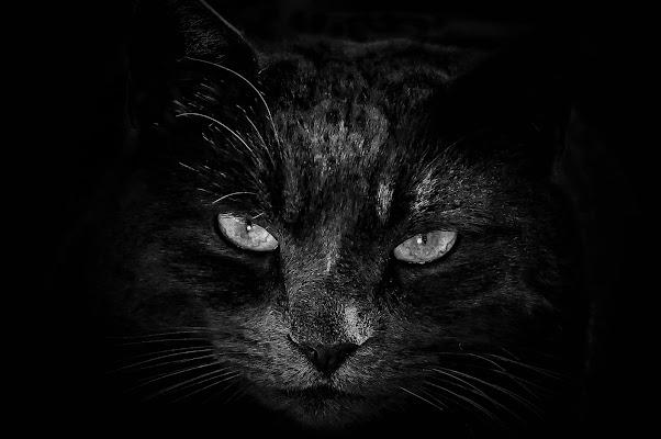 volevo un gatto nero, nero, nero.... di kaos