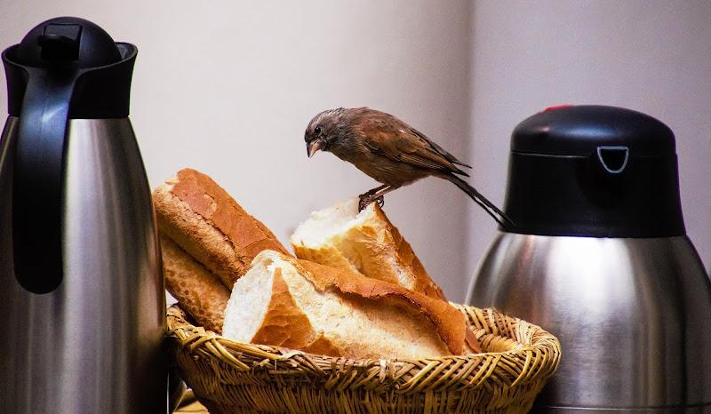 Quotidiana colazione di Alessio Zampetti