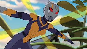 Ant-Man and Wasp thumbnail