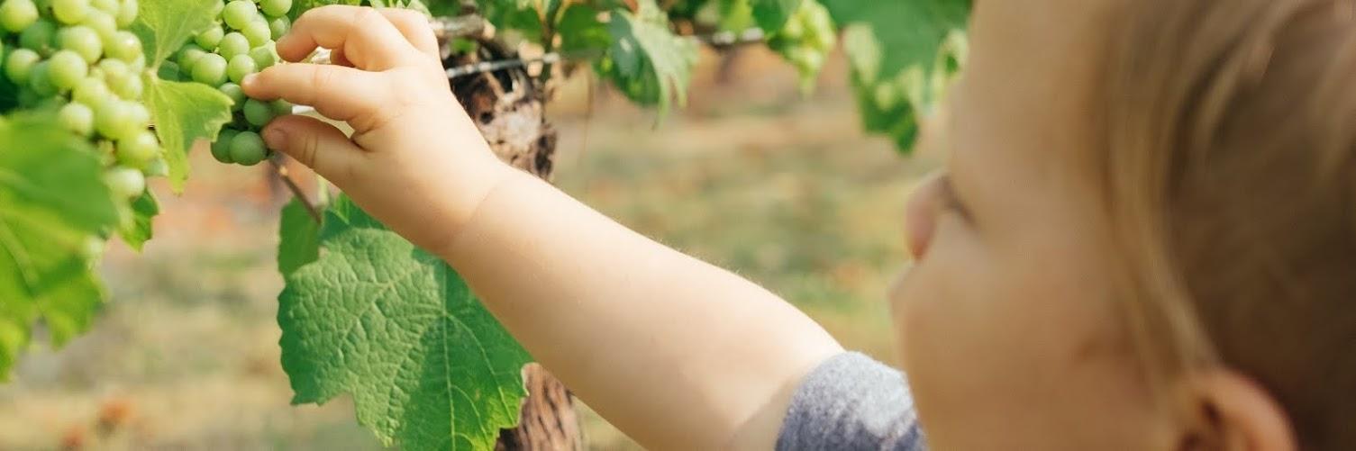 Viticultura Biológica e Poda de Videiras 2ª edição – 22 Fev 2020