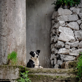Welcome home by Akashneel Banerjee - Animals - Dogs Playing ( greenery, animal, old town, dog portrait, home )