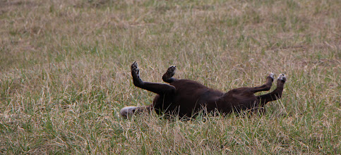 Photo: Nothing like a good roll.