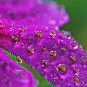 droplet5.jpg