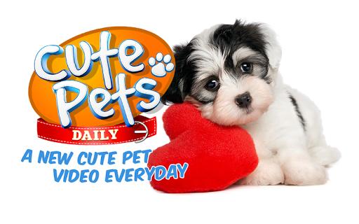 Cute Pets Daily: Fun Videos