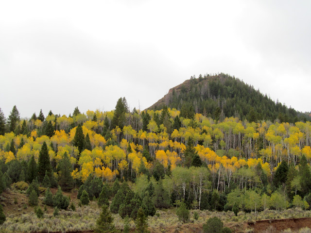 Yellow aspen near Pole Canyon