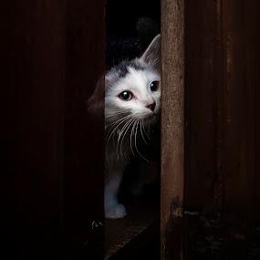 Will you take me home? by Dmitriev Dmitry - Animals - Cats Kittens ( kitten, cat, homeless, pet, animal )