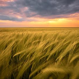 by Silviu Zlot - Landscapes Prairies, Meadows & Fields