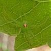 Magnolia Green Jumper ♀