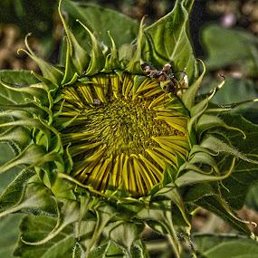 before becoming beautiful by Sara Verdini - Nature Up Close Gardens & Produce