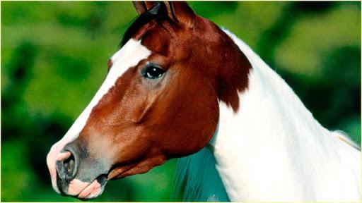 HD馬の画像