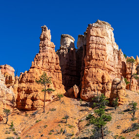 Bryce Canyon by Bert Templeton - Landscapes Deserts ( utah, bryce, canyon, bryce canyon, utag, rocks, desert, park,  )