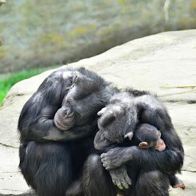 Happy family by Fathuddin Riyadz - Animals Other Mammals
