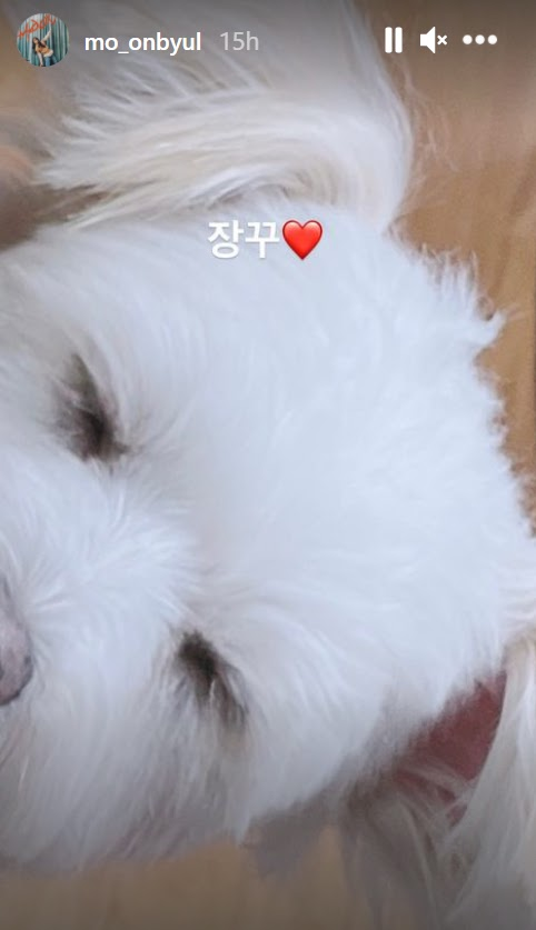 moonbyul dog