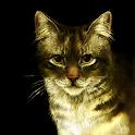 Коты-Воители. Справочник icon