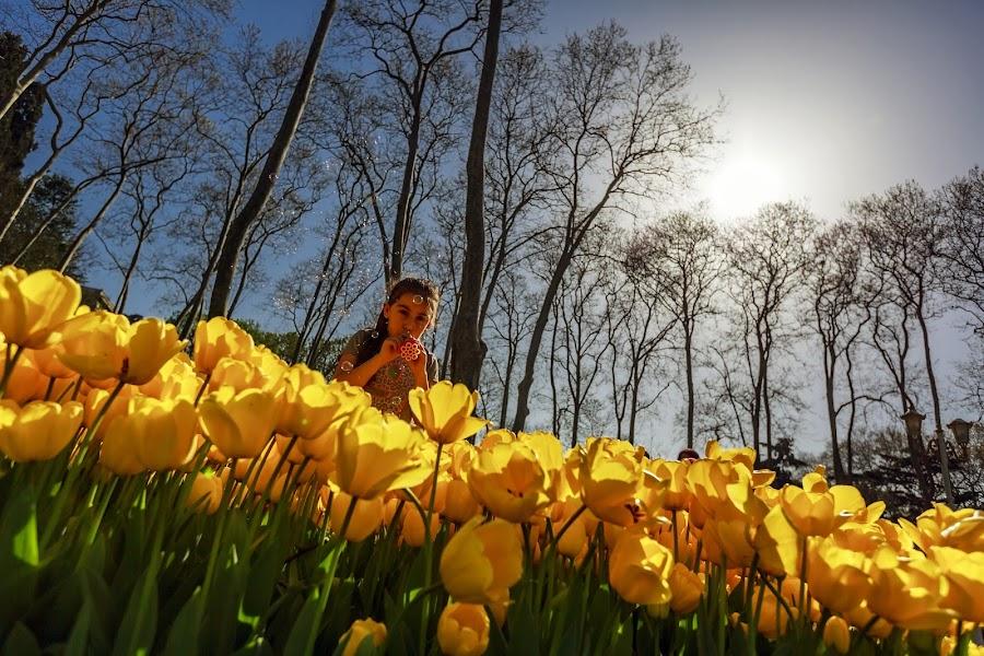 Gülhane Parkı by Veli Toluay - City,  Street & Park  City Parks (  )