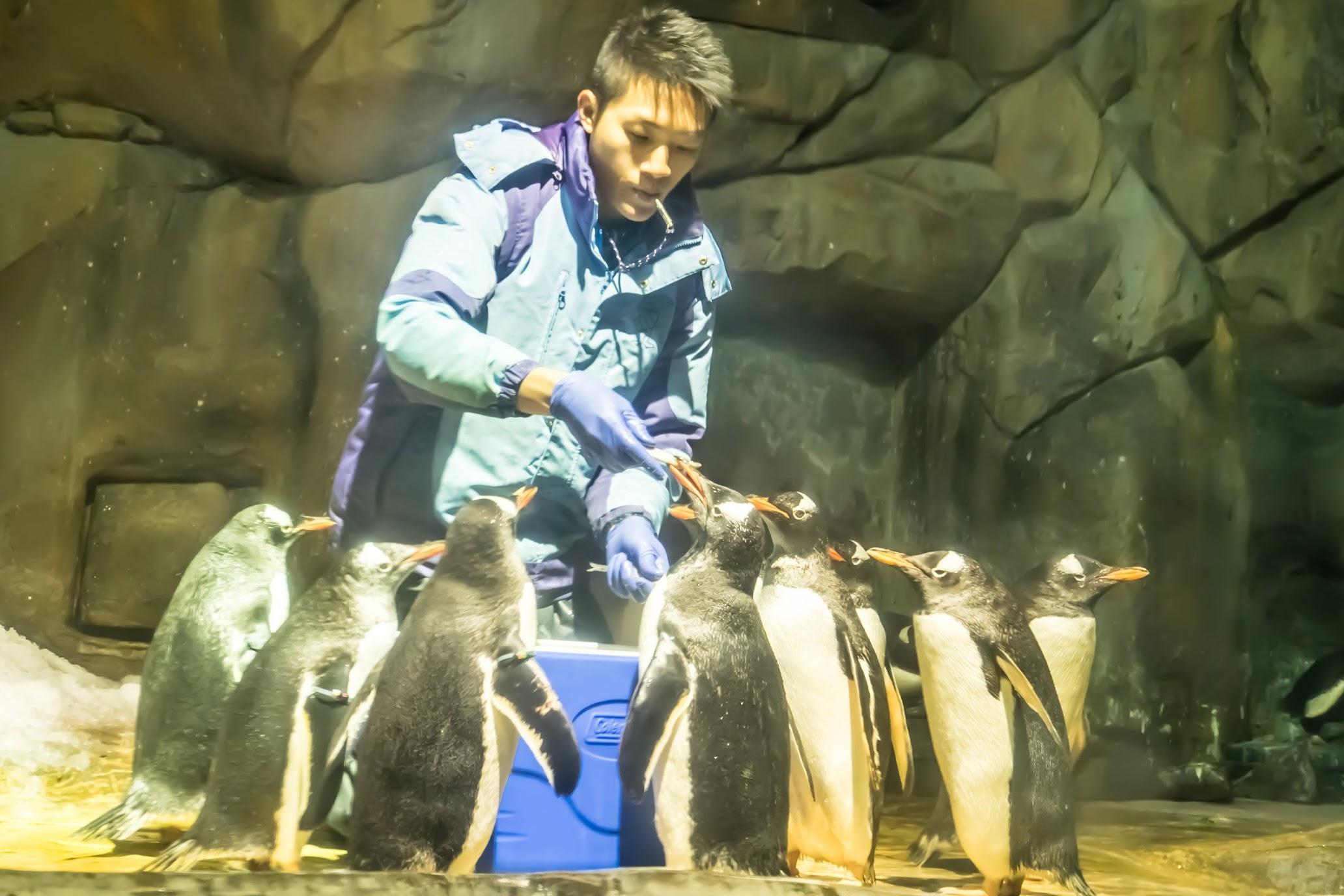 香港 海洋公園(オーシャンパーク) ペンギン