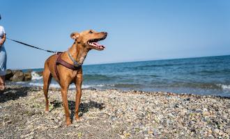 La capital estrena la playa para perros más grande de Almería