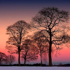 Line Of Trees by Jürgen Mayer - Landscapes Sunsets & Sunrises ( sonnenuntergang, baum, landschaft, winter, tree, sunset, trees, landscape, bäume )