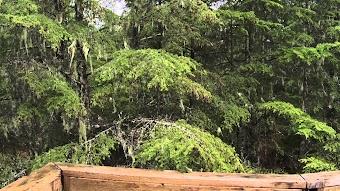 Rainforest Cabins
