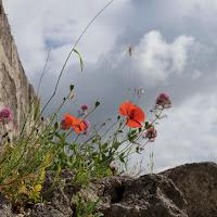 Primavera tra le rocce