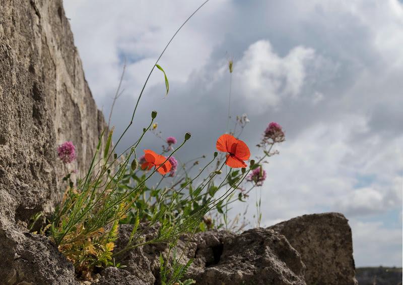 Primavera tra le rocce di Tiziana Detoni