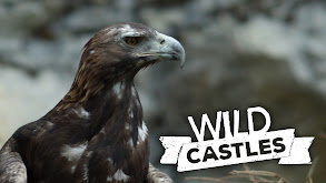 Wild Castles thumbnail