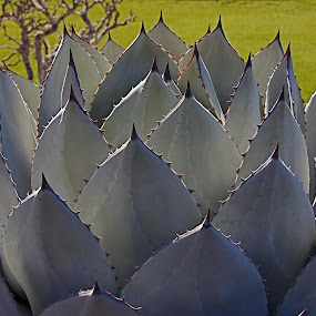 Filoli by Dan Larsen - Nature Up Close Other plants (  )