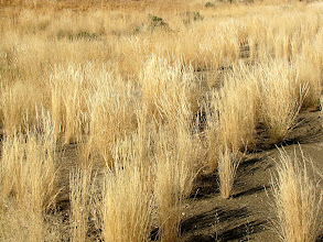 Photo: Namibian grass