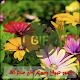Download صور صباح و مساء الخير متحركة GIFs For PC Windows and Mac