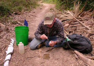Photo: Collecting dung beetles from the forest trail at the Palm Grove.