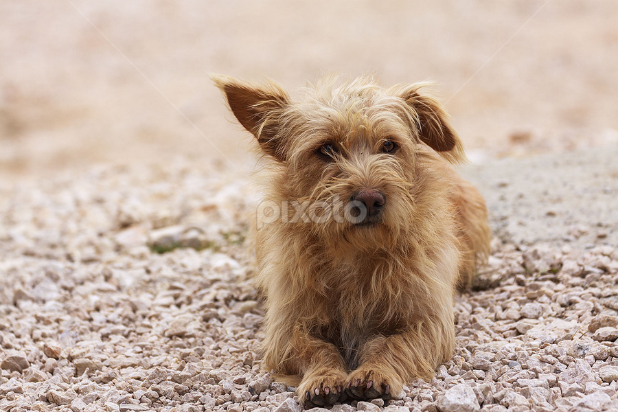 good dog by Sabin Fota - Animals - Dogs Portraits ( orange, pure, life, nature, sabin fota, pet, dog, portrait, animal )
