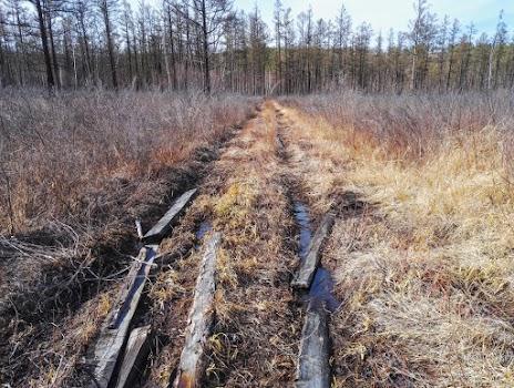 доски уложенные в колею проходящую по болотистой местности