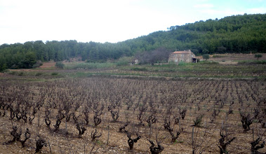 Photo: Terroir du rosé Bandol AOC