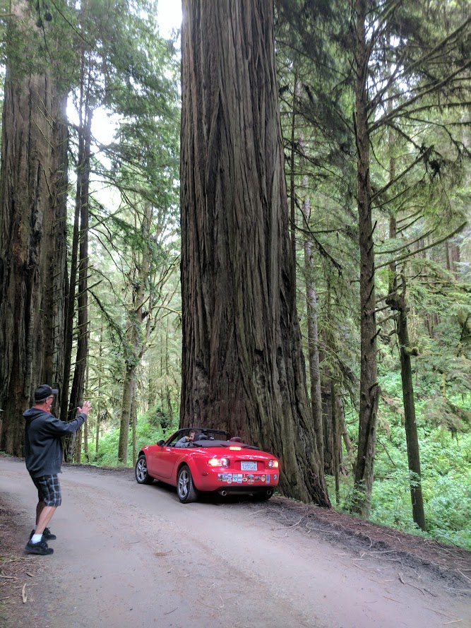 Convertibles were design to watch tall trees! Redwoods, CA