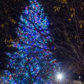 Dickens of a Christmas by Teresa Solesbee - City,  Street & Park  City Parks ( city, night, tree, event, christmas, lights, park )