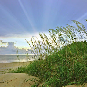 Can't get enough of this place! by Dottie Mabry - Landscapes Beaches
