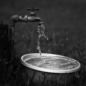 Island Style Birdbath by Nicolas Los Baños - Artistic Objects Still Life ( water, faucet, pwcstilllife-dq, black and white, backyard, water drop,  )