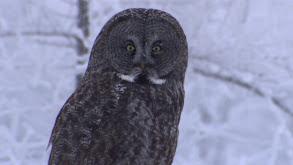 Owl Power thumbnail