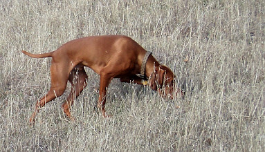 Photo: Royce The Wonder Dog at Cache Creek Wildlife Area, Redbud Trail.