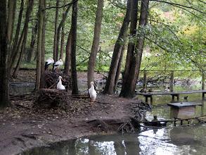 Photo: Der Tierpark Kunsterspring bei einem Ausflug vom Ferienhaus www.inselhaus-Rheinsberg.de im Hafendorf Rheinsberg