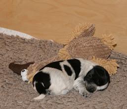 Photo: und die Ellie hat ihn sofort zum Kontaktliegen aufgefordert :)