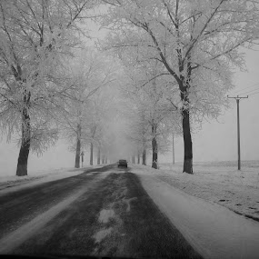 *** by Carmen-Laura B - Black & White Landscapes ( winter, snow, frost, trees, road )