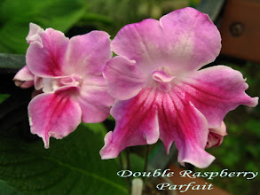 Photo: Double Raspberry Parfait
