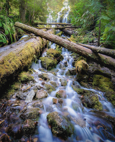 Upper Proxy by Clint Melsha - Landscapes Forests ( forest, stream, nature, waterfall, oregon, long exposure, lush, trees )