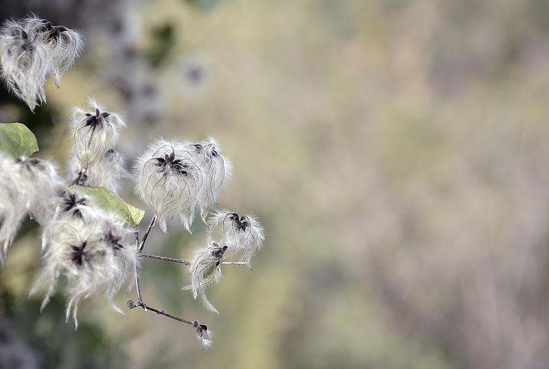 delicata leggerezza di nicoletta lindor